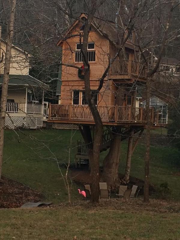 A79_a family treehouse