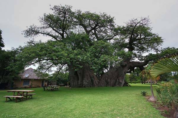 sunland-baobab-1[2]