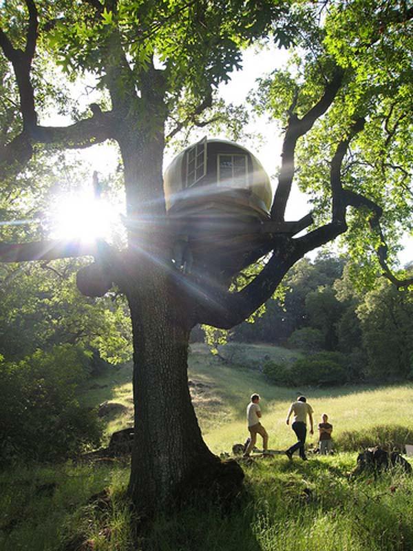 ukiah treehouse1