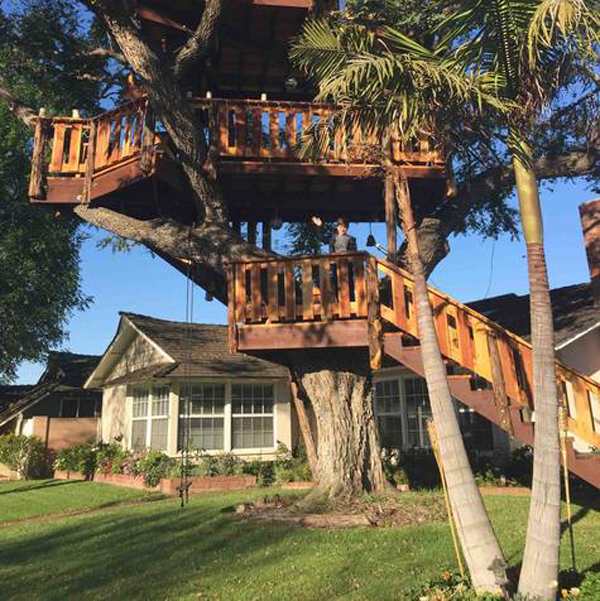 petition treehouse