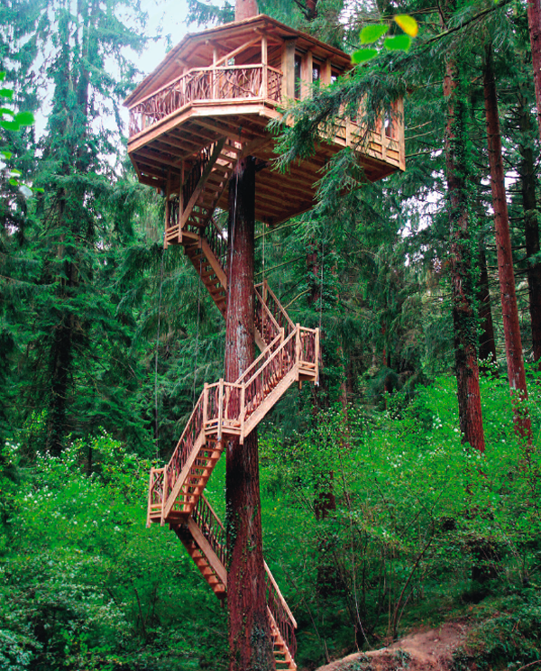 treehouses monsa pic 2