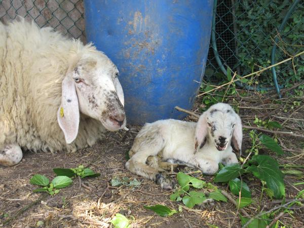 Beda con mamma
