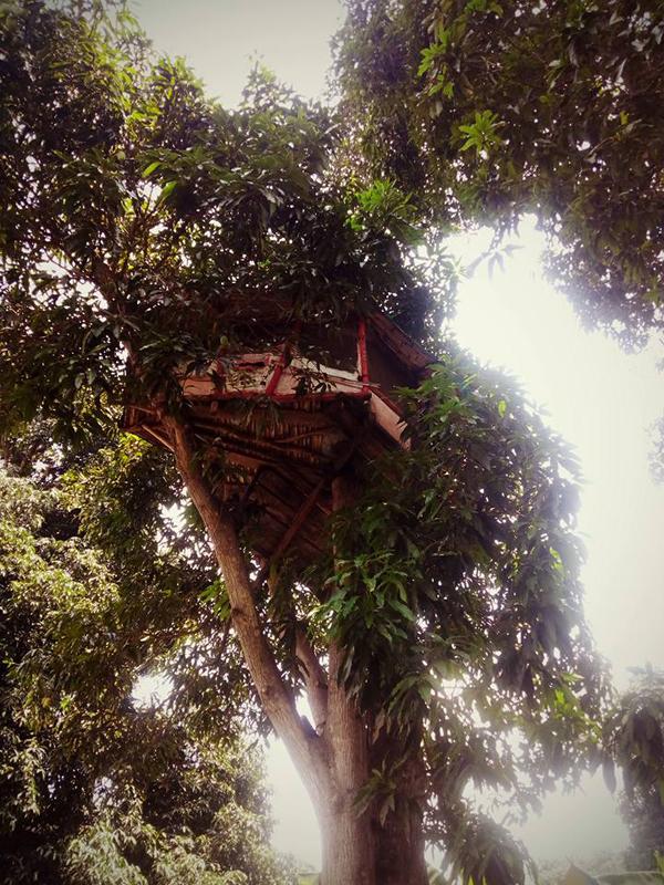 treehouse jp veracruz
