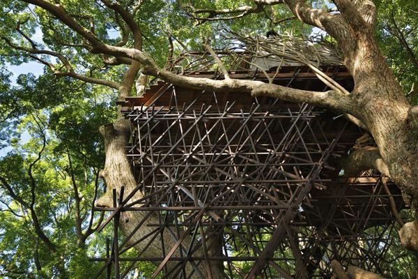 Bird's Nest Atami pic