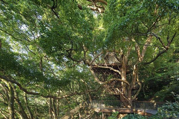 Bird's Nest Atami pic7