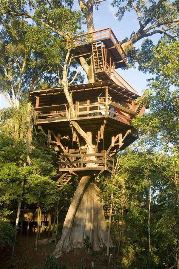 porecau treehouse pic